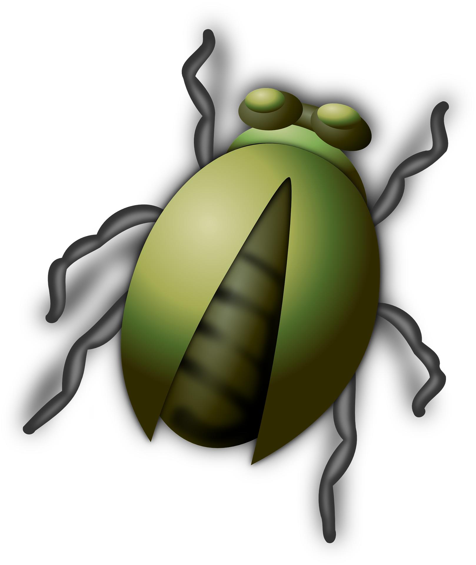 Beetle bug insect